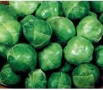 Couve-de-bruxelas - Brassica olerassica - 50 un.