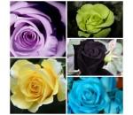 Kit Rosas - 5 Variedades