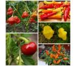 Kit Pimentas - 5 variedades