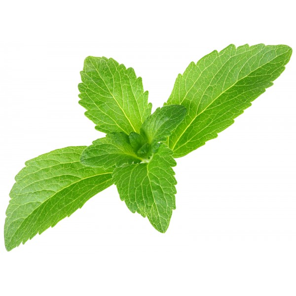 Thesis on stevia rebaudiana
