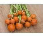 Cenoura Parisiense - Daucus carota