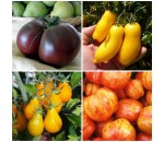 Kit 4 variedades de tomate