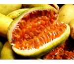 Maracujá Banana - passiflora mollissima