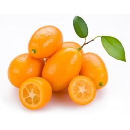 Kumquat - Citrus japonica
