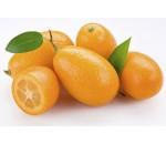 Citrus Japonica (kumquat)