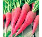Rabanete Comprido Vermelho - Raphanus sativus
