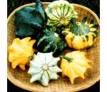 Abóbora Coroa Espinhos - Cucurbita pepo