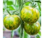 Tomate Green Zebra - Lycopersicon esculentum