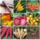 Kit económico de 9 variedades de Tubérculos