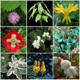 Kit Económico de 9 Variedades de Plantas Raras