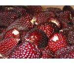 Milho Morango - Strawberry Popcorn - 20 un.