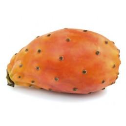 Figo da Índia - Opuntia ficus-indica