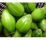 Jiló - Solanum gilo - 50 un.