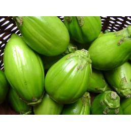 Jiló Verde Comprido - Solanum aethiopicum