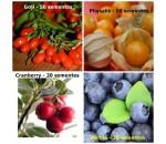 Kit Frutos Arbustivos - 4 variedades