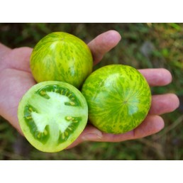 Tomate Green Zebra - Solanum lycopersicum