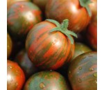 Tomate Black Zebra - Lycopersicon esculentum