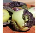 Berinjela Carina - Solanum melongena
