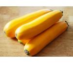 Courgette Amarela - Cucurbita pepo