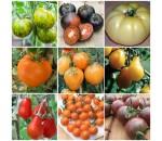 Kit Económico de 9 Variedades de Tomates